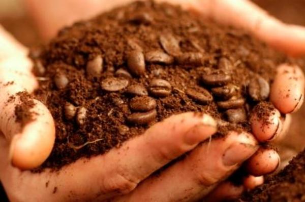 Coffee_Grounds.jpg