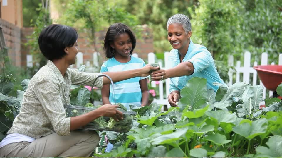 362082502-beet-vegetable-garden-broccoli-choosing.jpg