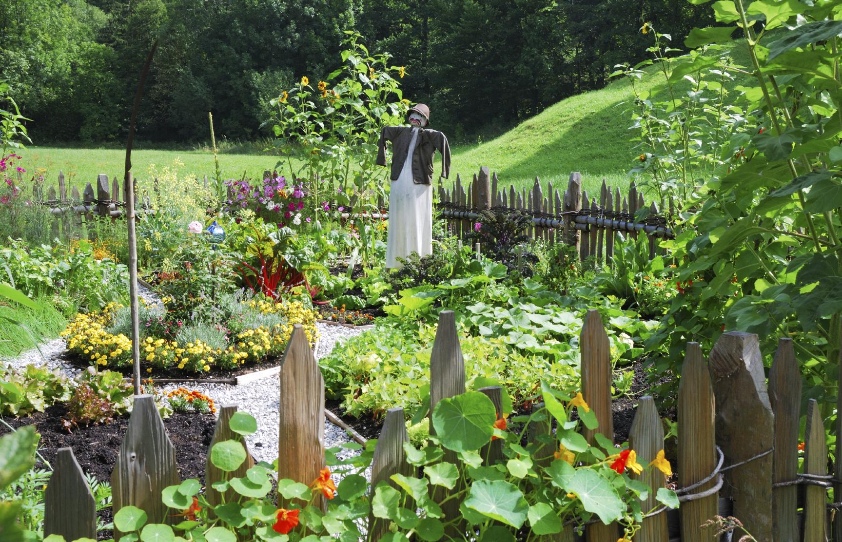vegetable-garden1.jpg