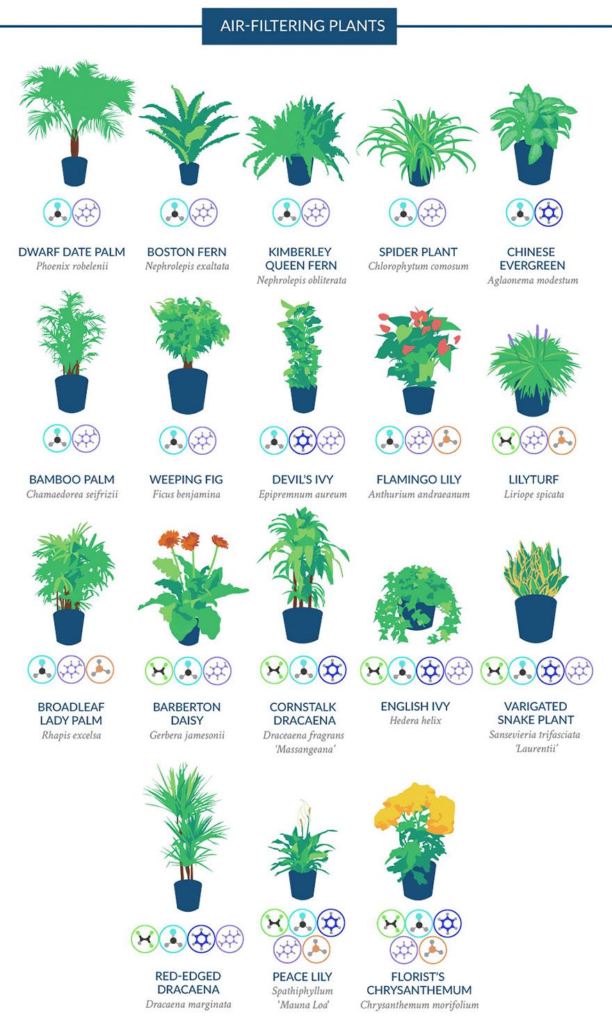 Air filtering plants.jpg
