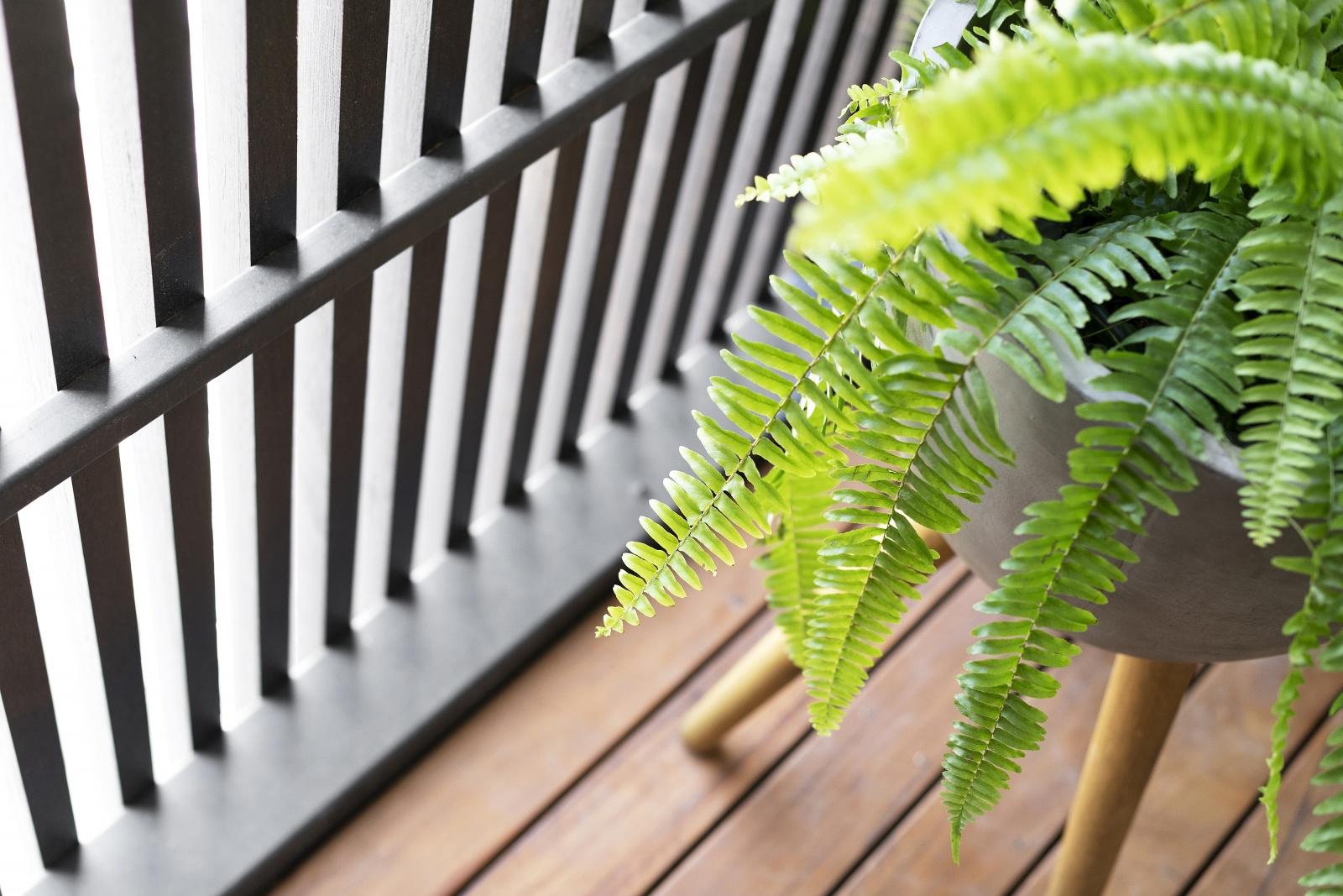 lifespaces_group_bluestonehouse_inside_balcony.jpg