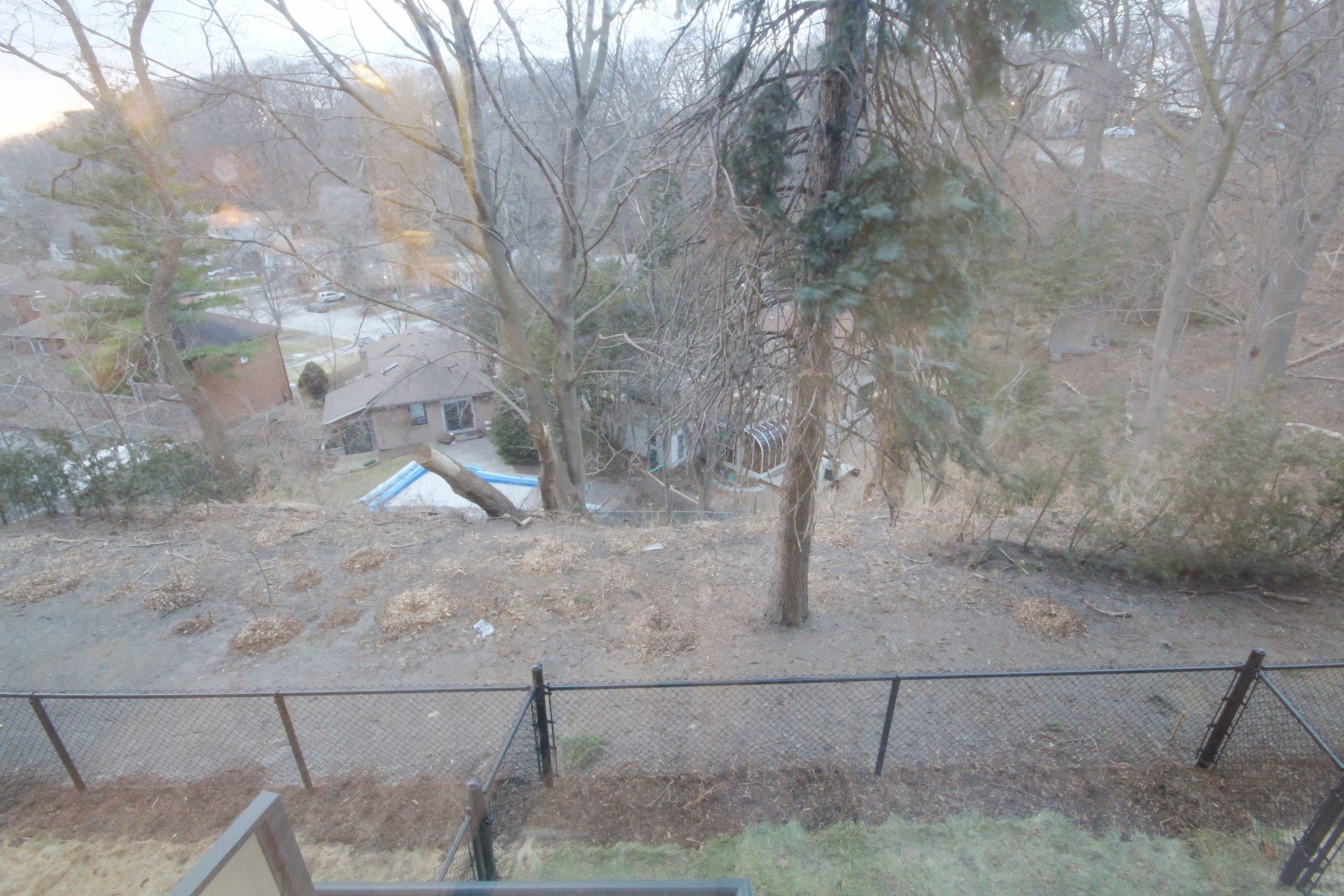 11 Backyard.jpg
