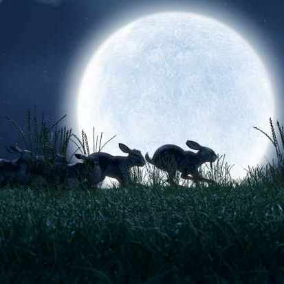 Watership Down     (BBC One, Dec 21, 7pm)  You know this one. Some sadists decided to remake it. Tissues ready.