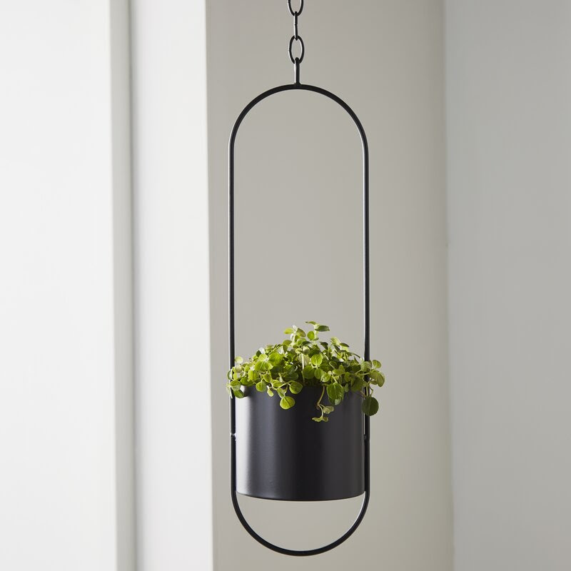 Hanging baskets   add height to small spaces and give you an excuse to... buy more plants
