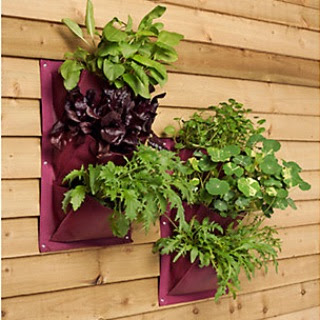 Plant herbs or flowers in this   herb planter   to create a wall of greenery, perfect for even the teeniest spaces