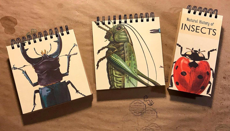 artful-painter-sketchbooks-bugs-series.jpg