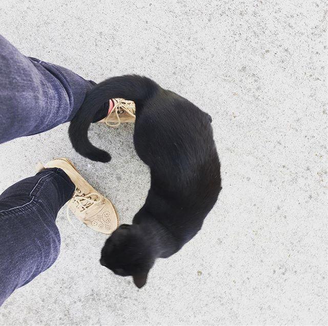Follow up post: I pet Trash Cat