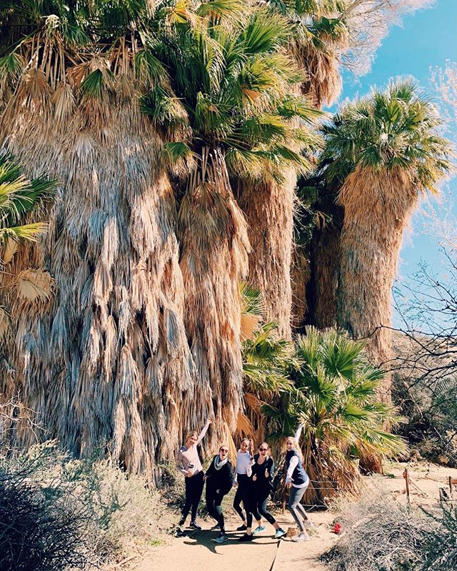 Never quite nailed the album cover shot but I'll be #trappedforever with these Joshua trees any day.