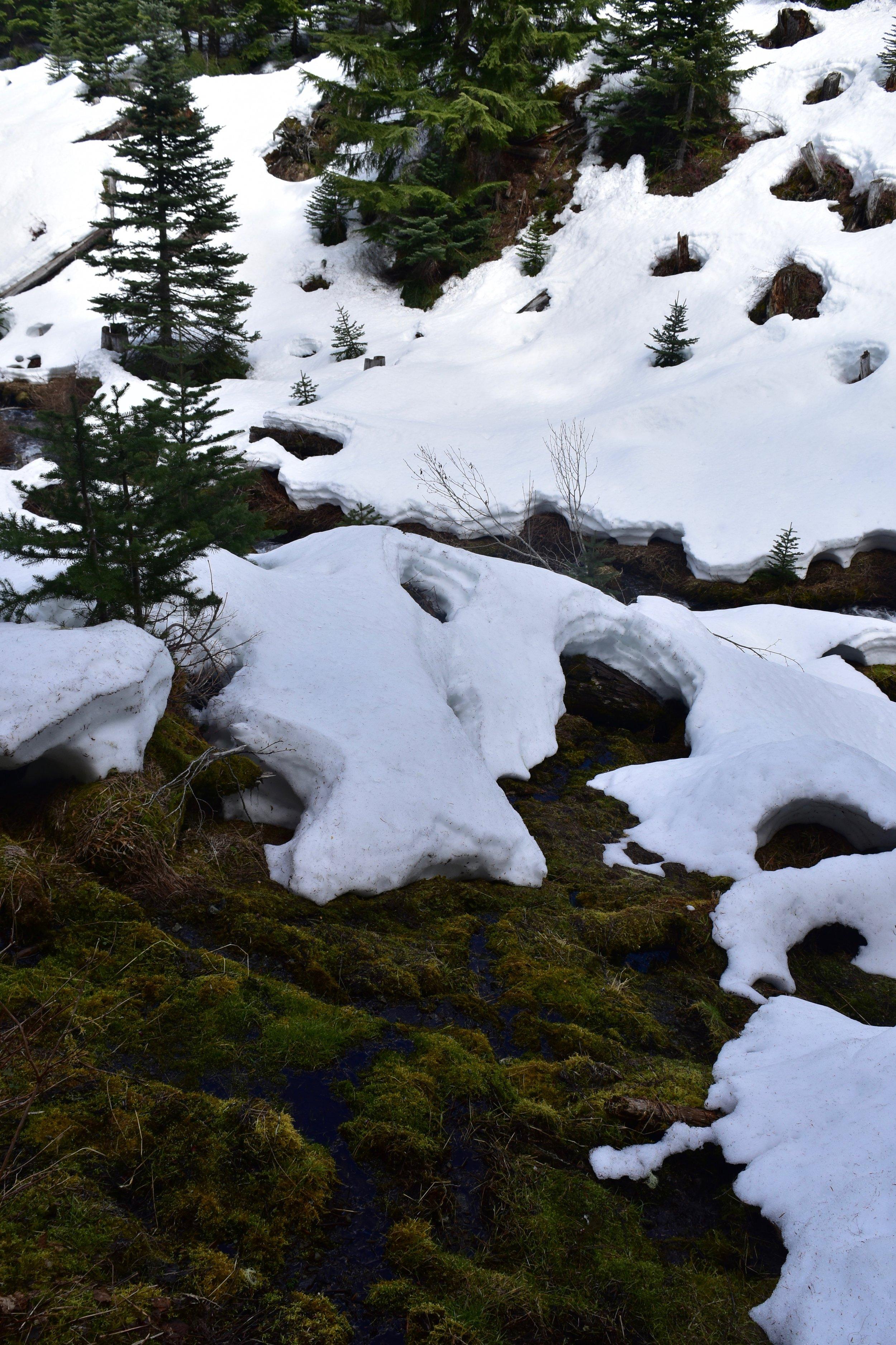 Frozen swamp lands