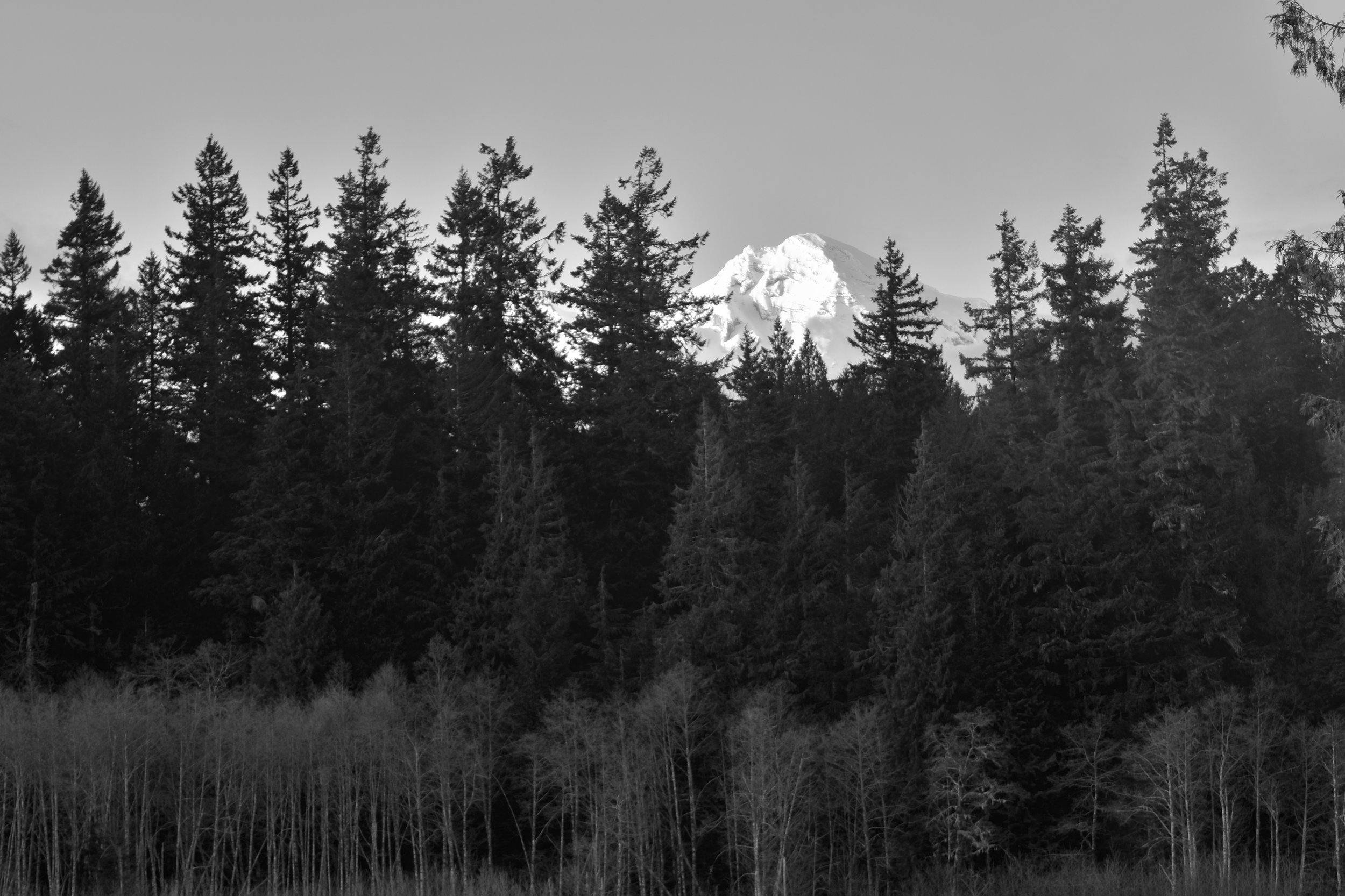 Rainier from south of the Nisqually river
