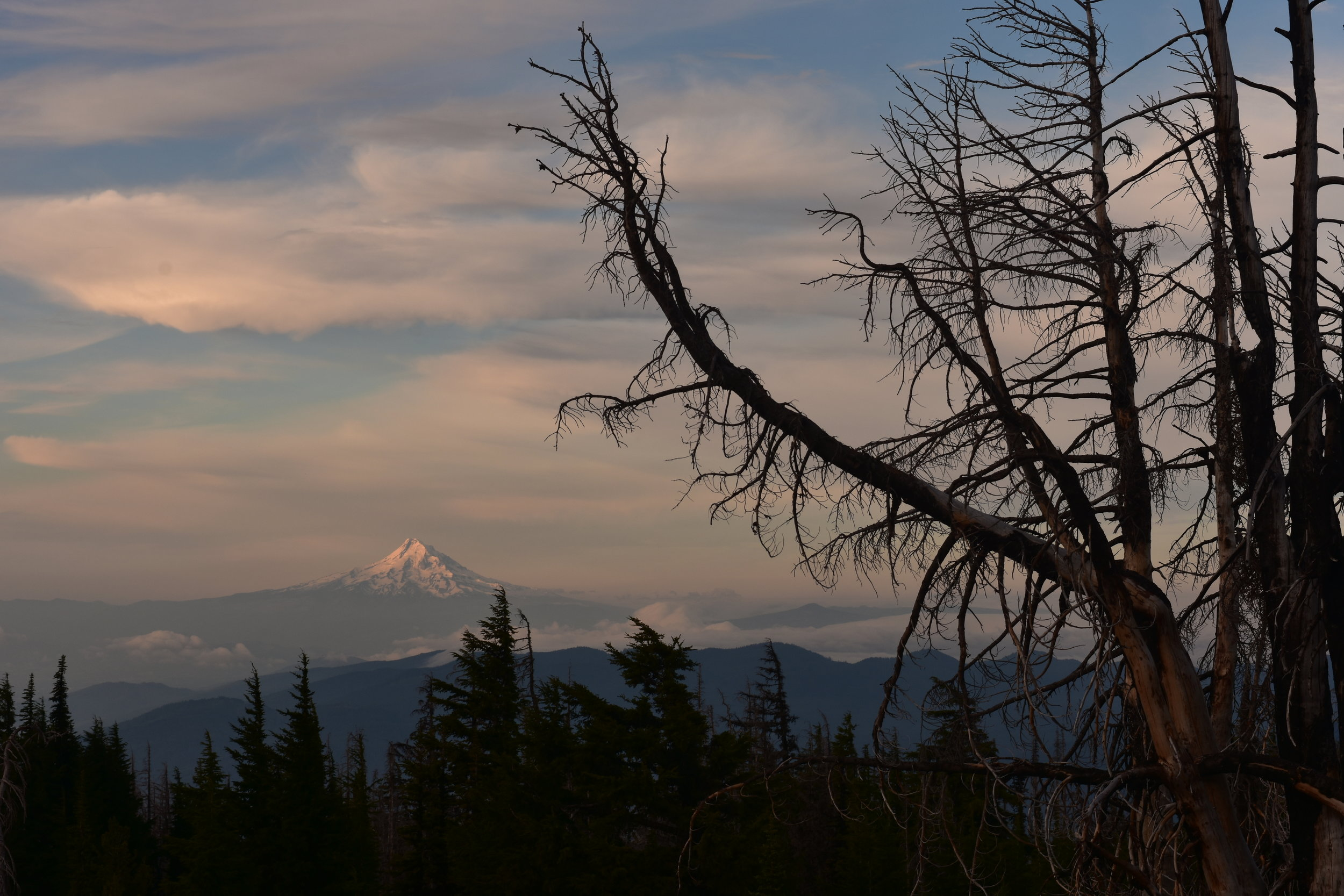 Mt. Hood with morning light framed by the dead trees of the Mt. Adams fire