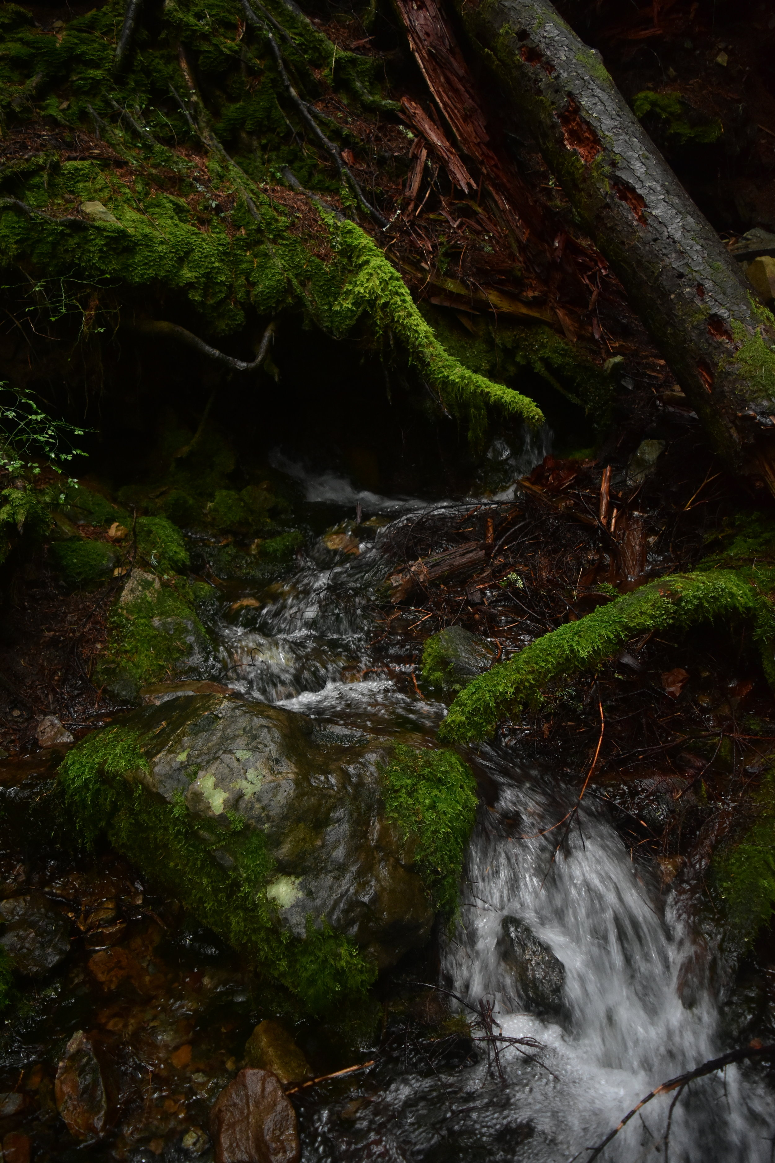 Water flows under the roots and the dirt