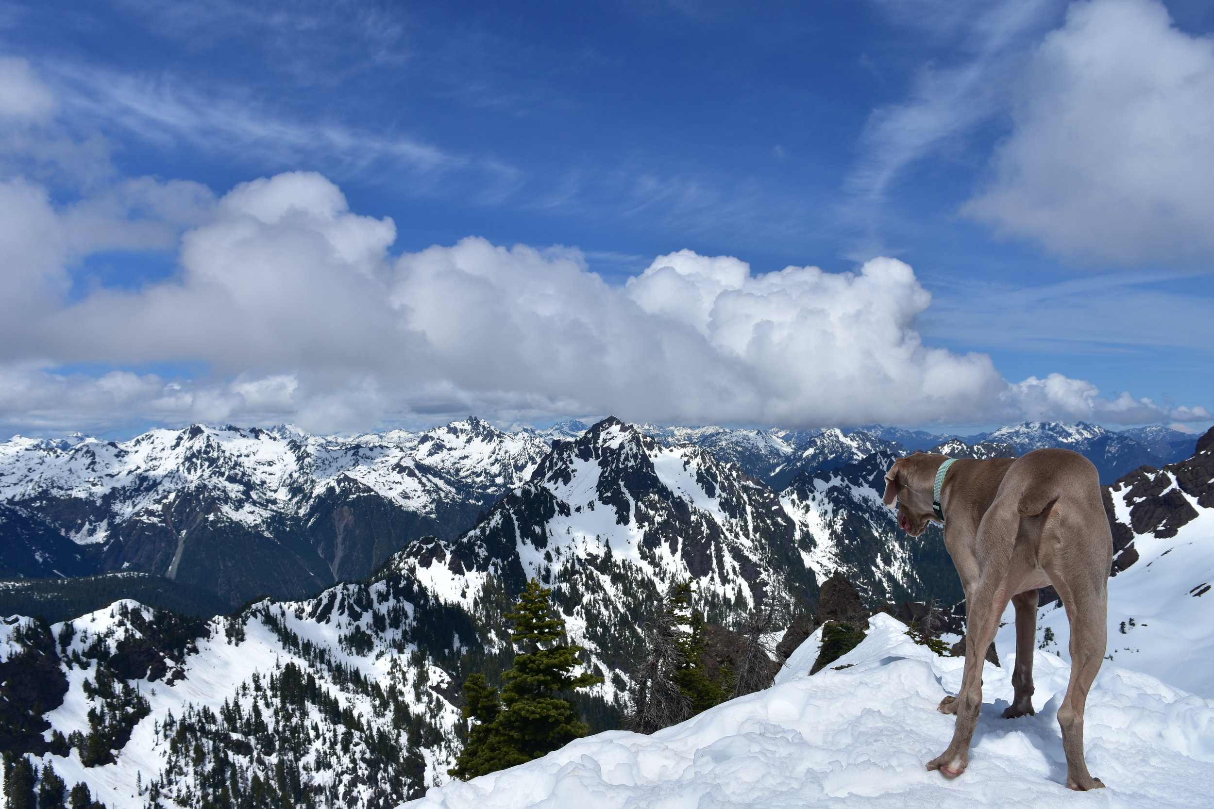Doggo on the summit and contemplates existence in the heart if the Olympics