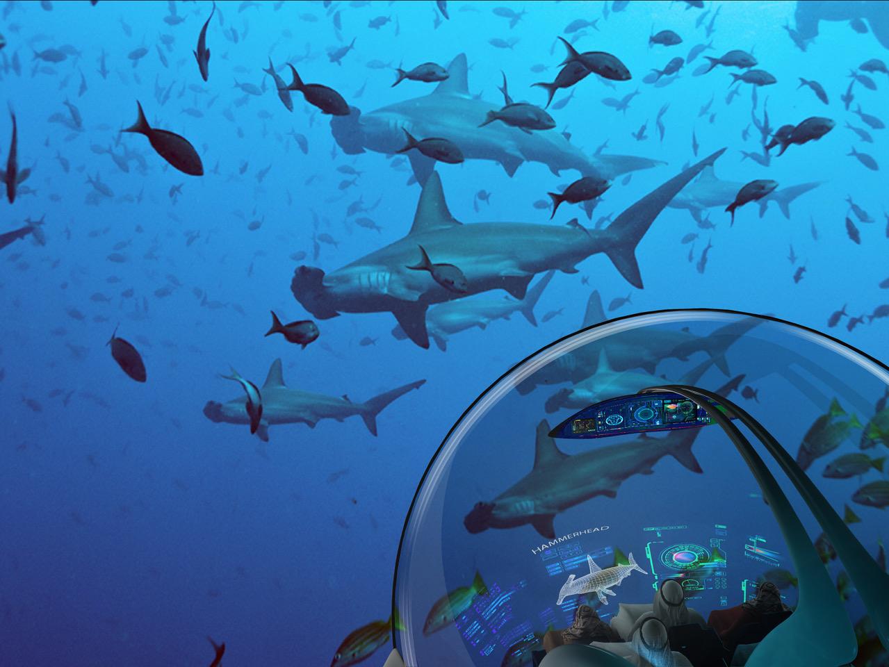 Shark Adventure.jpeg