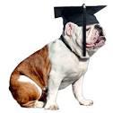 bulldog-grad.png