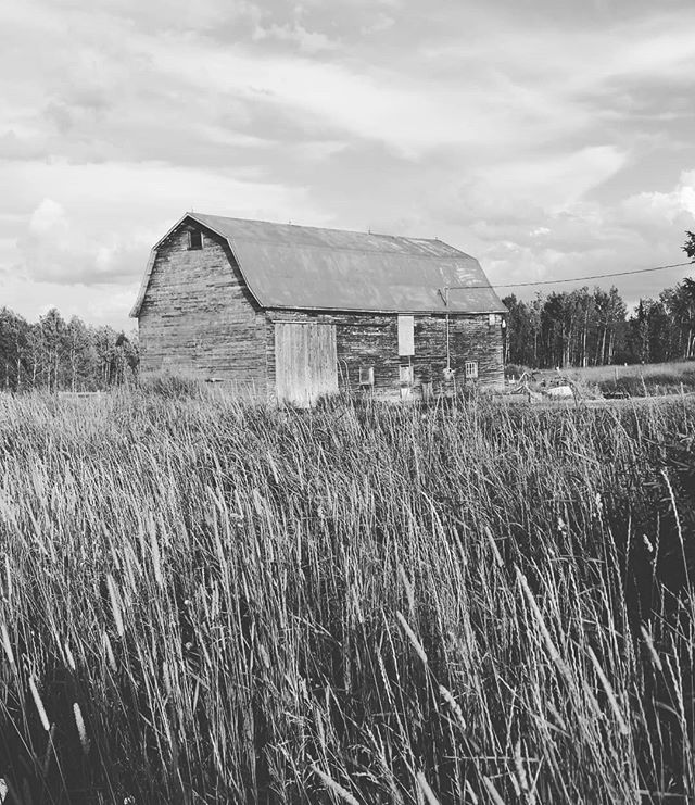 """Simplify, simplify"" , Thoreau counseled.  Homesteaders did.  The morning sun, the birds of the field and forest. It is the simple pleasures that greeted me today.  #farmlife #barns #ontario #"
