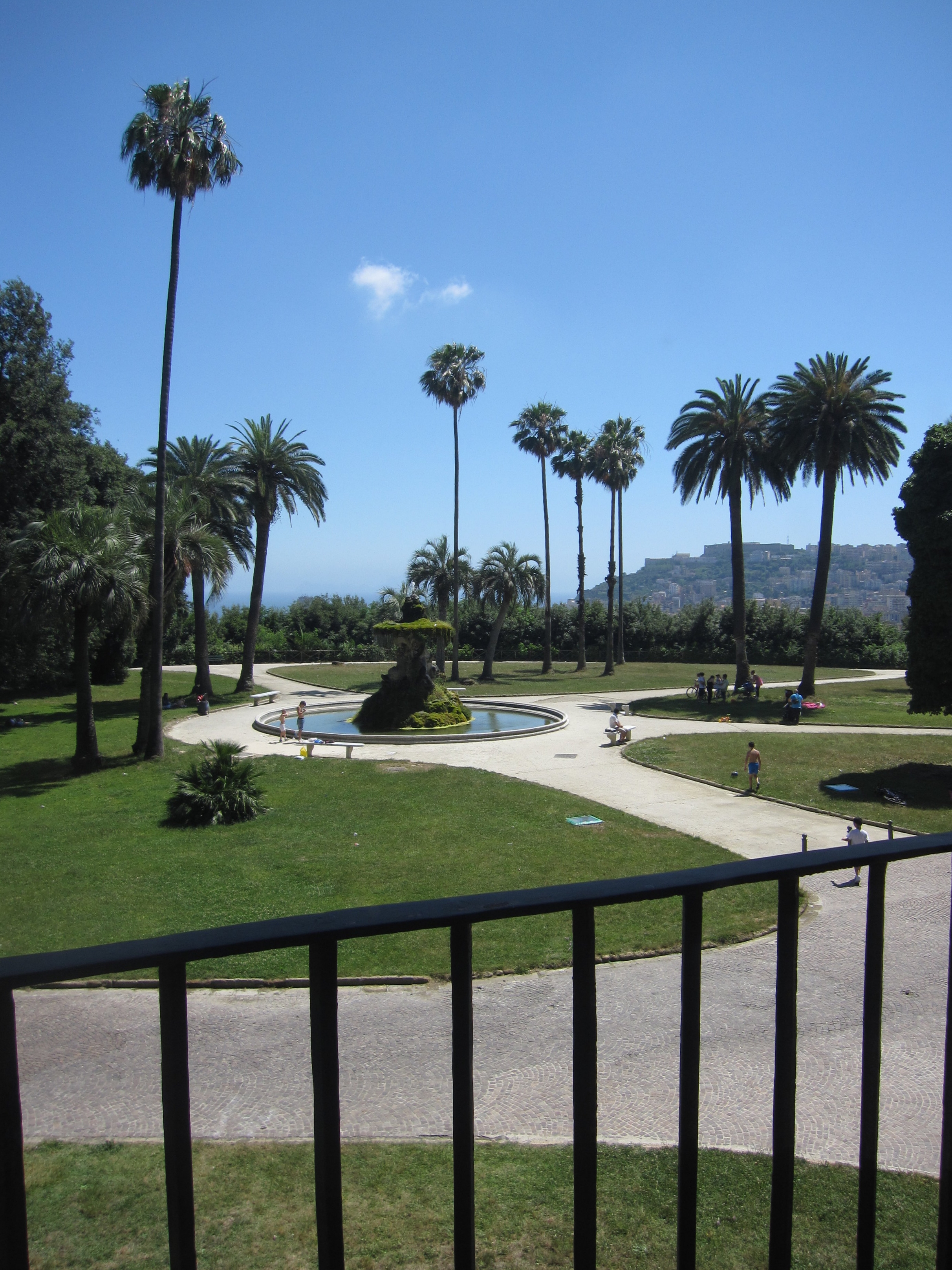 View of the park.