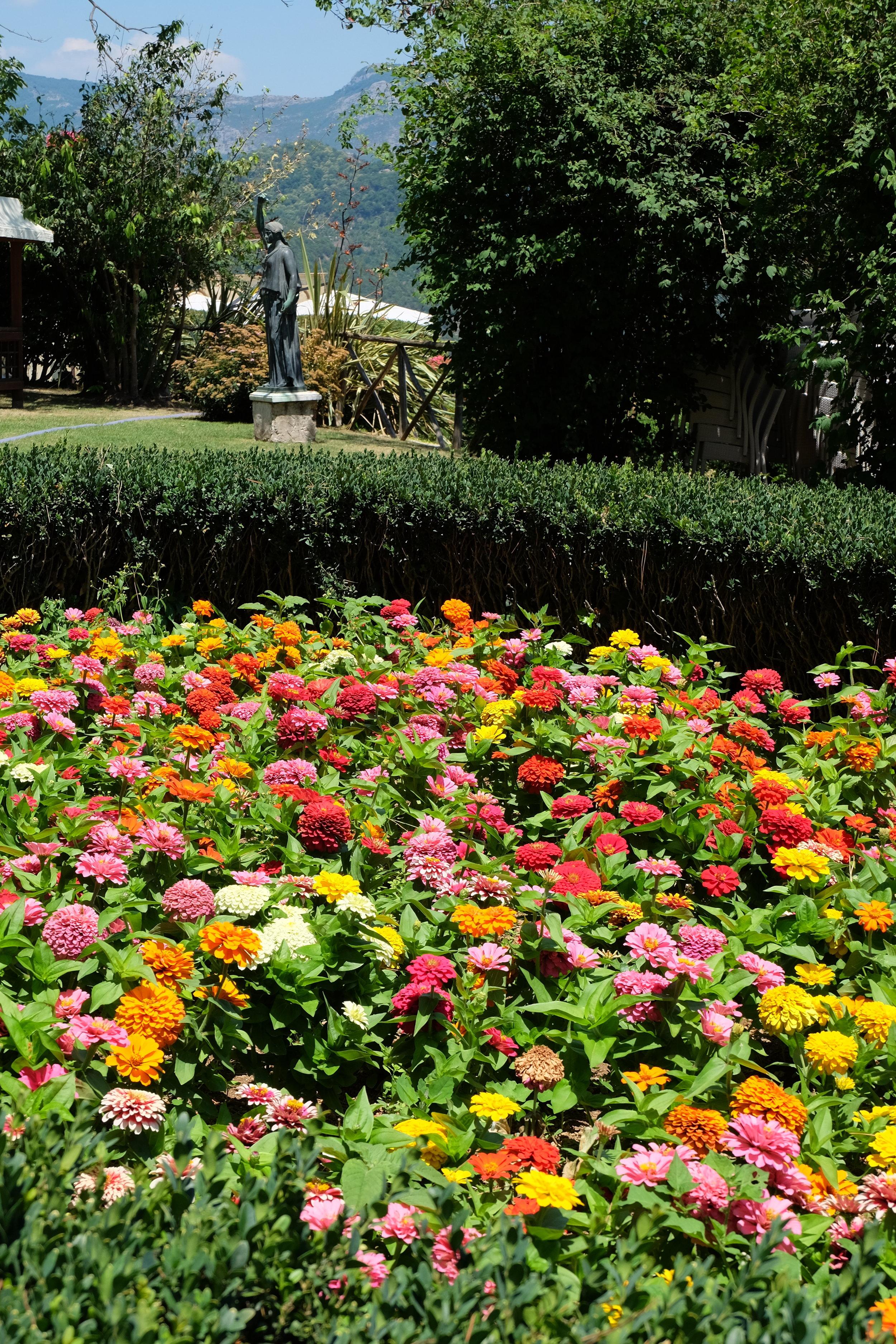 Garden flower bed.