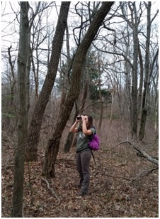 Rebecca inspects a stick nest.