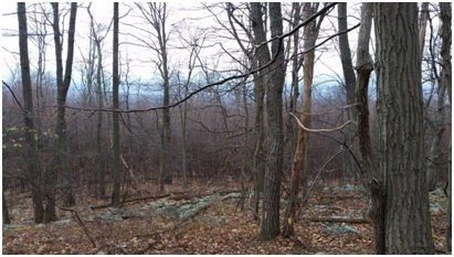 Forest cut on Kittatinny Ridge.