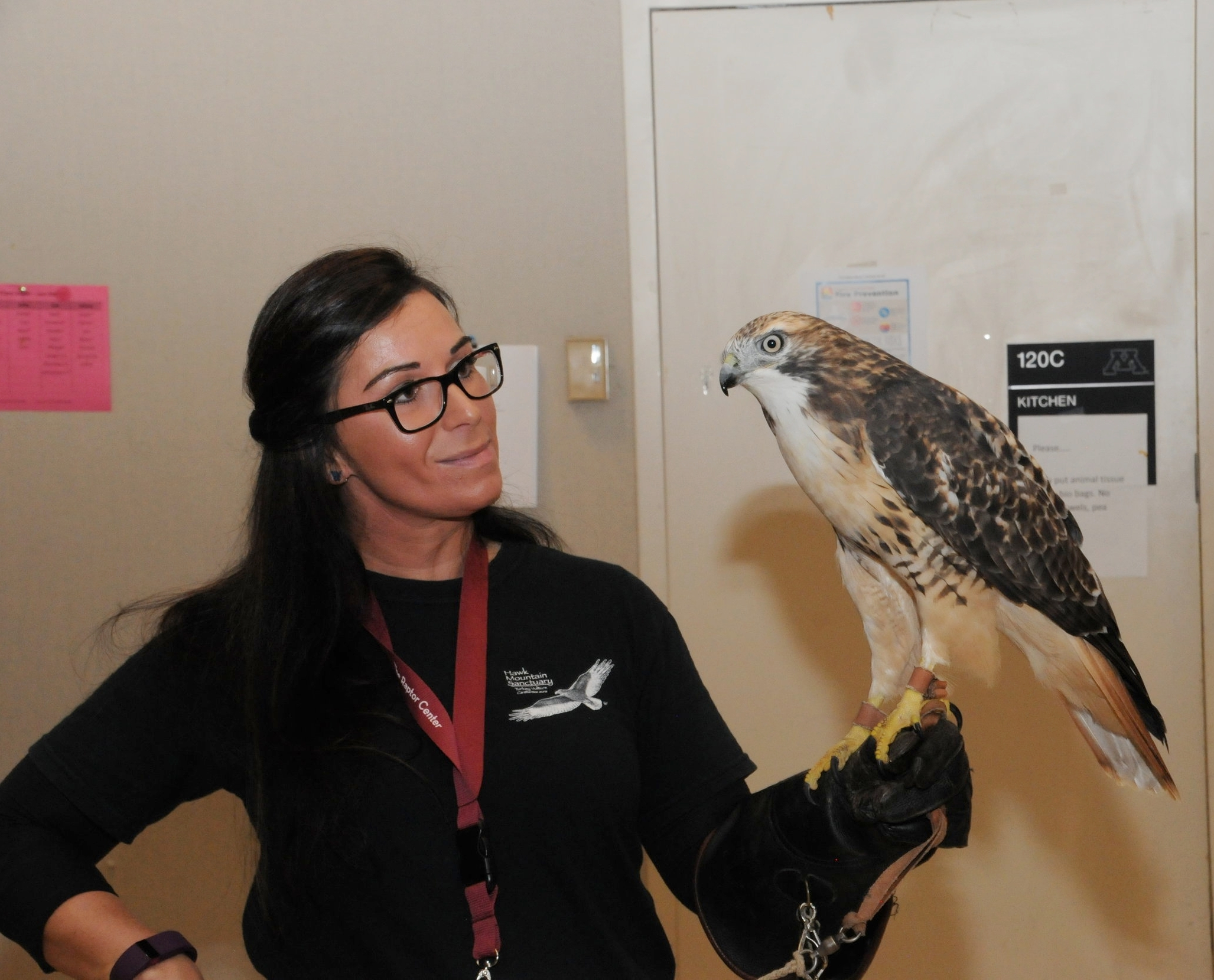 Rachel hones her raptor training skills with TRC's resident red-tailed hawk.