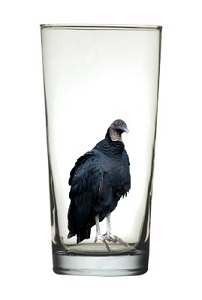 glass half full with vulture smaller .jpg