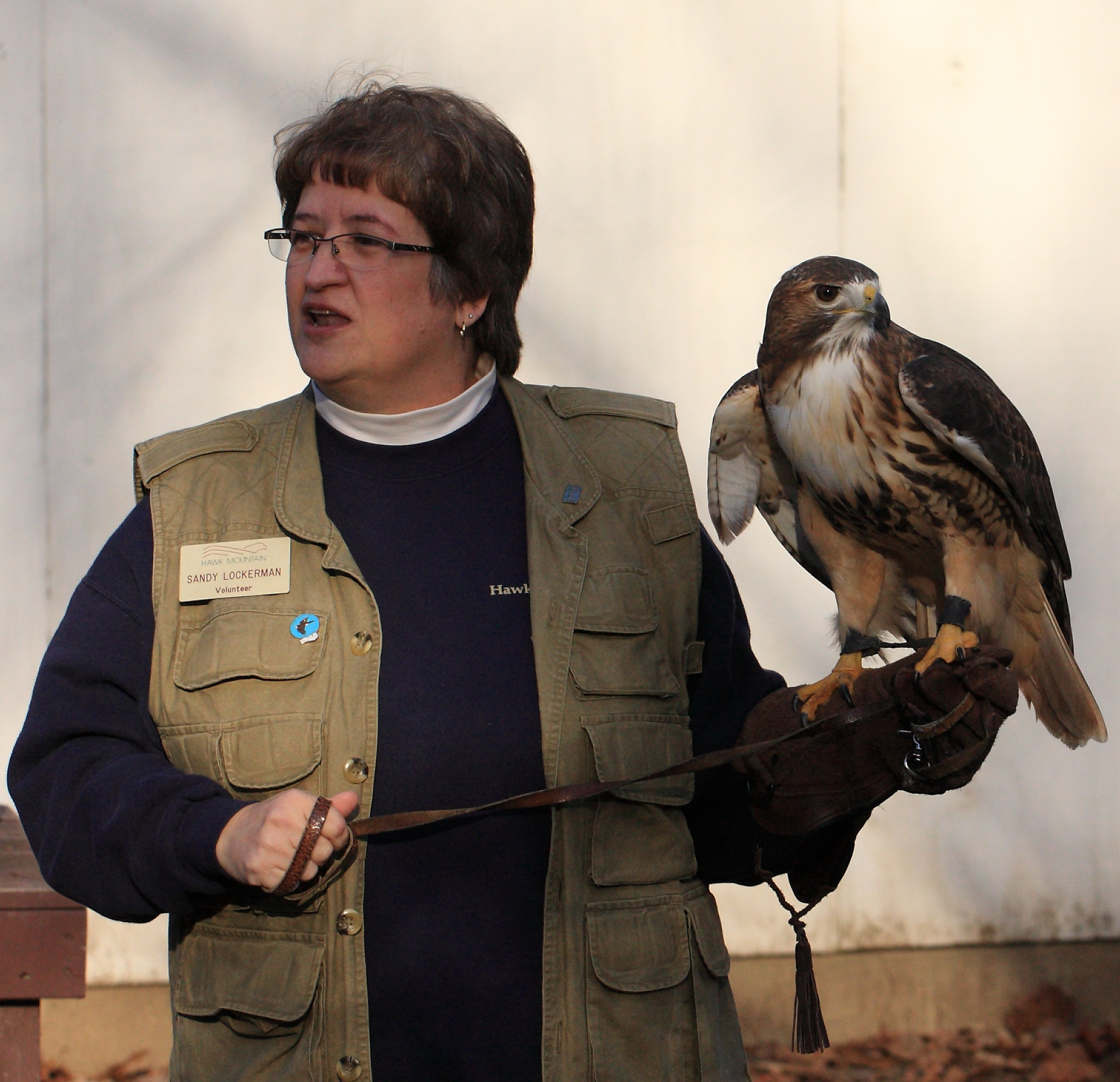 Sandy presenting a Raptors Up Close program with the red-tailed hawk.