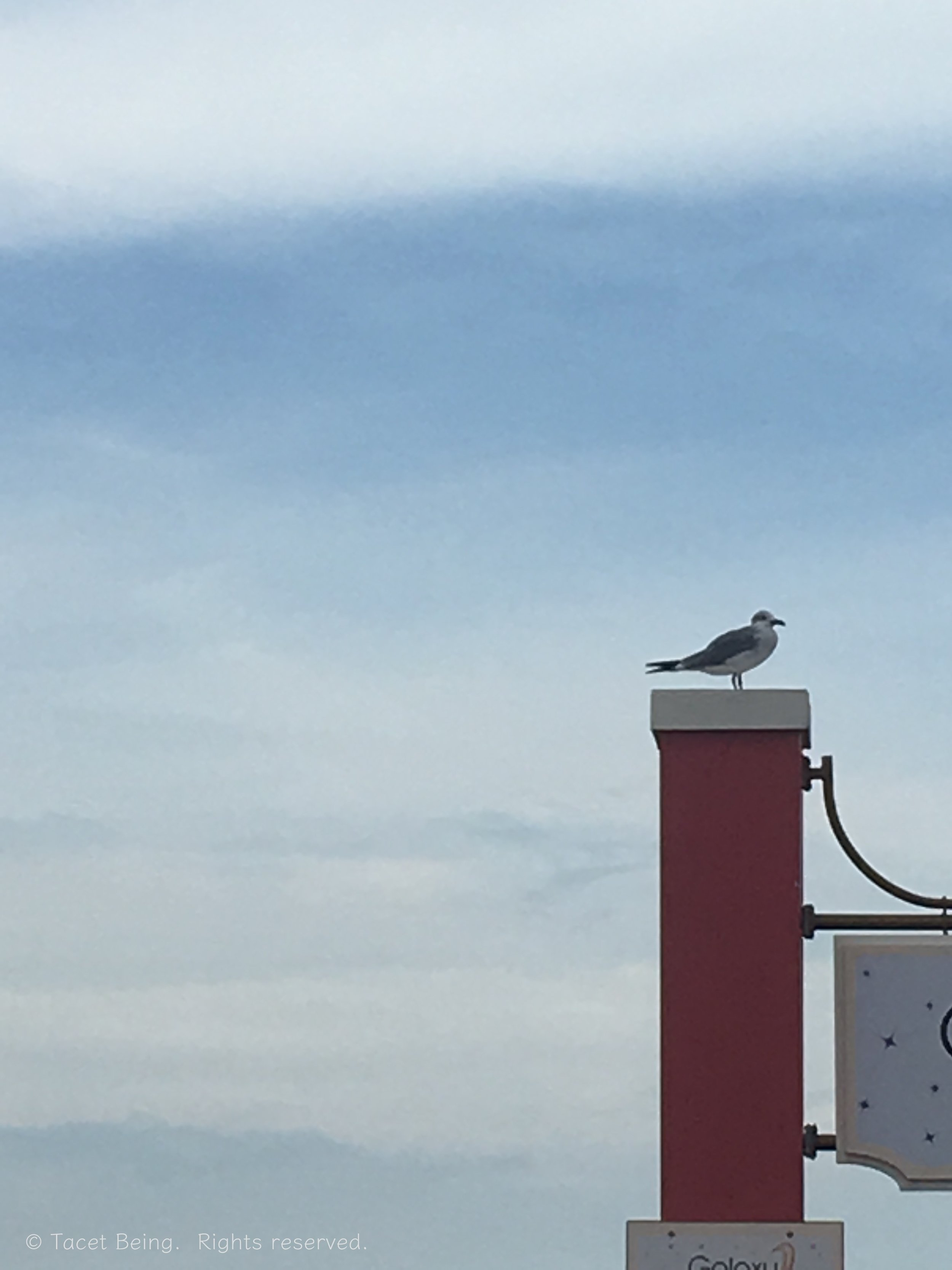 gull on the sign post_tb.jpg