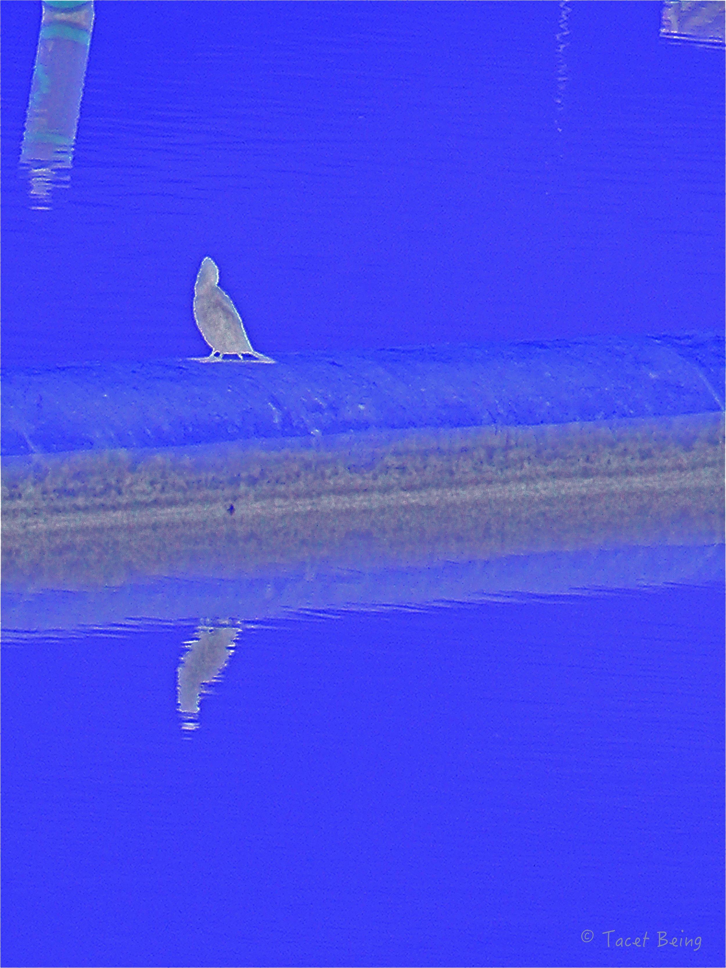 bird on damn 2_tb.jpg