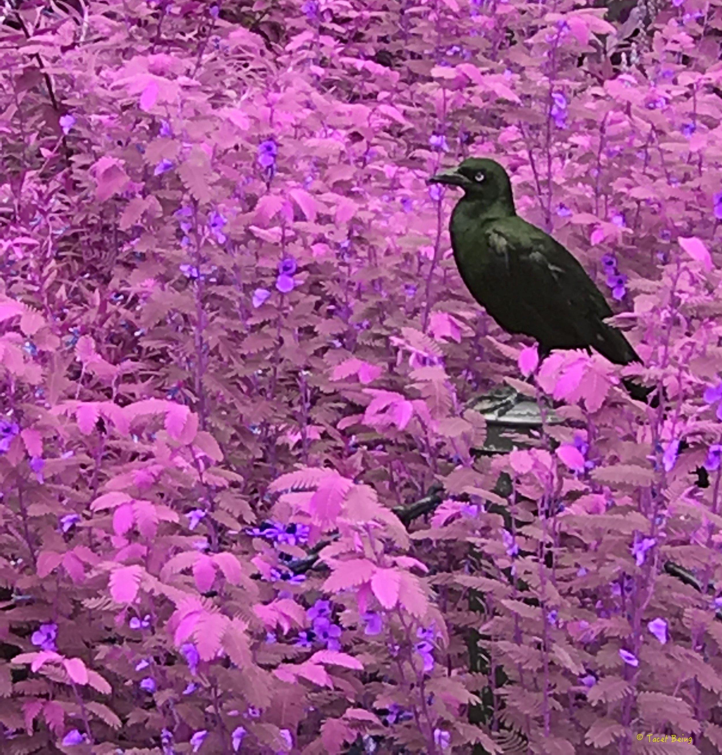 bird in bushes_tb.jpg