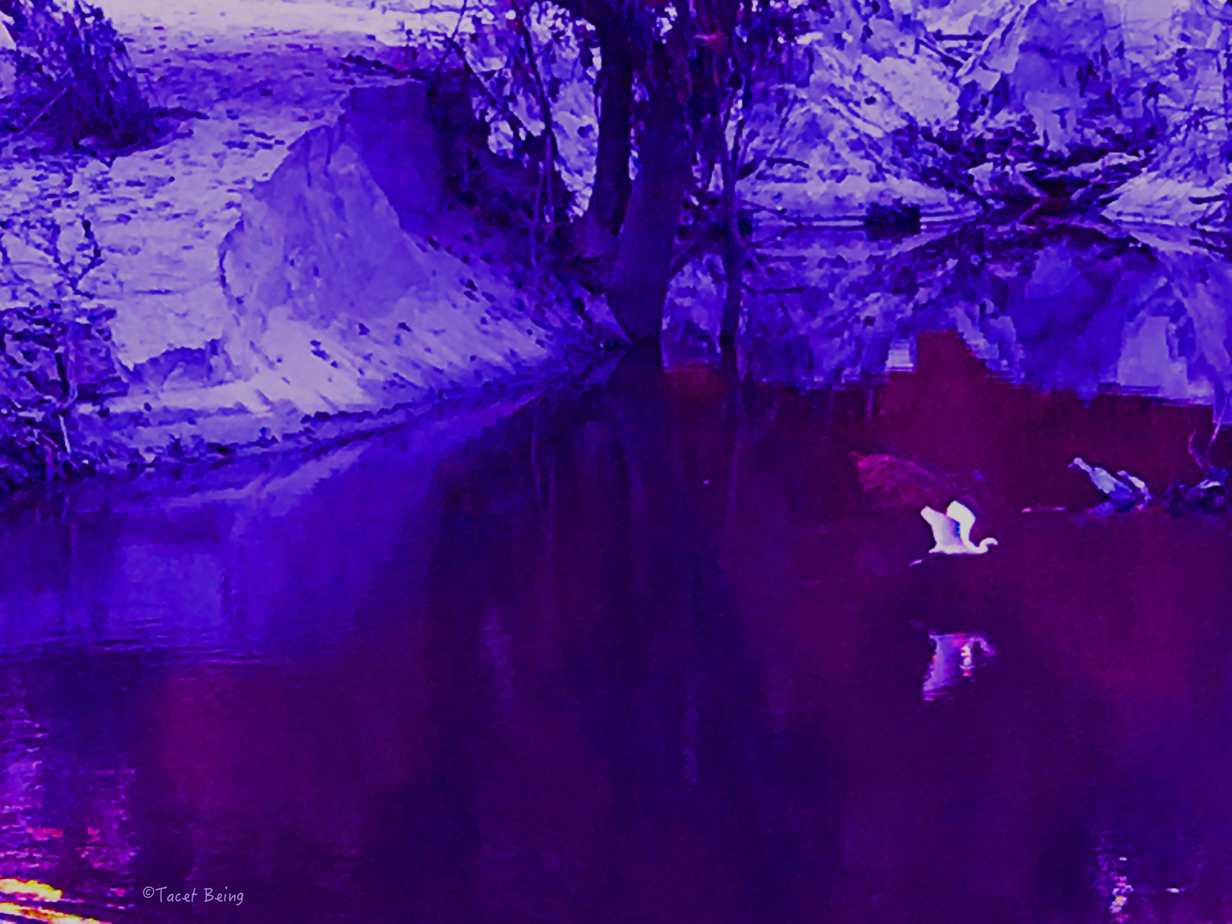 bayou heron flight_tb.jpg