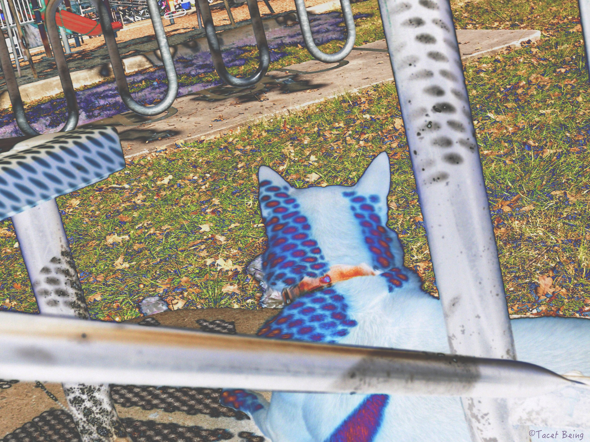 rin watching playground_tb.jpg