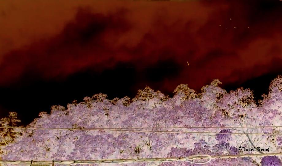 hawk from video_tb.jpg