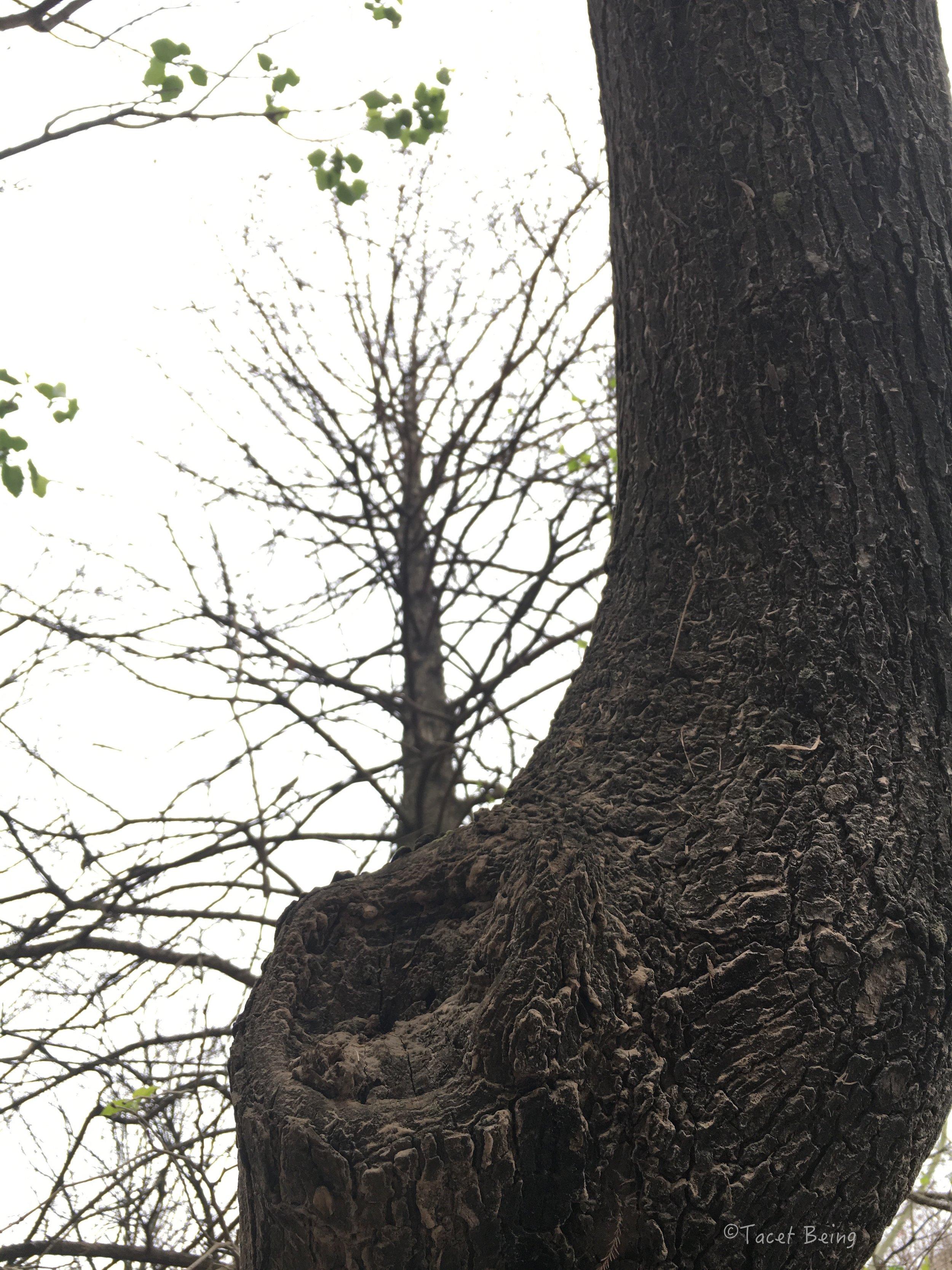 tree out of tree_tb.jpg