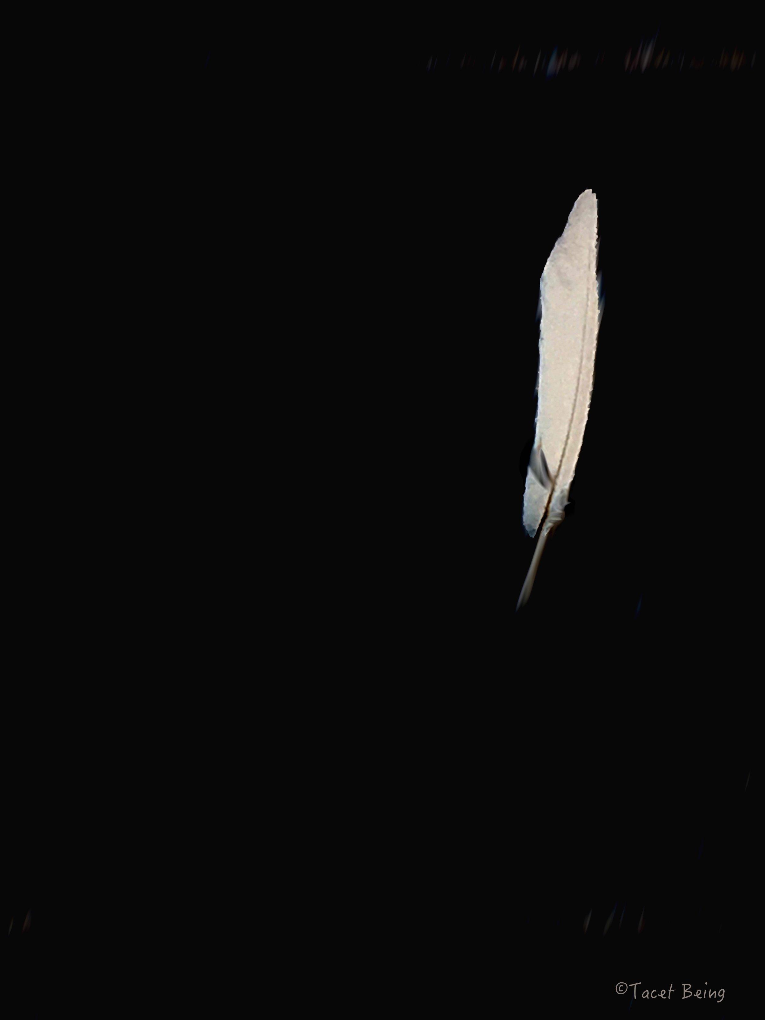 black feather_tb.jpg