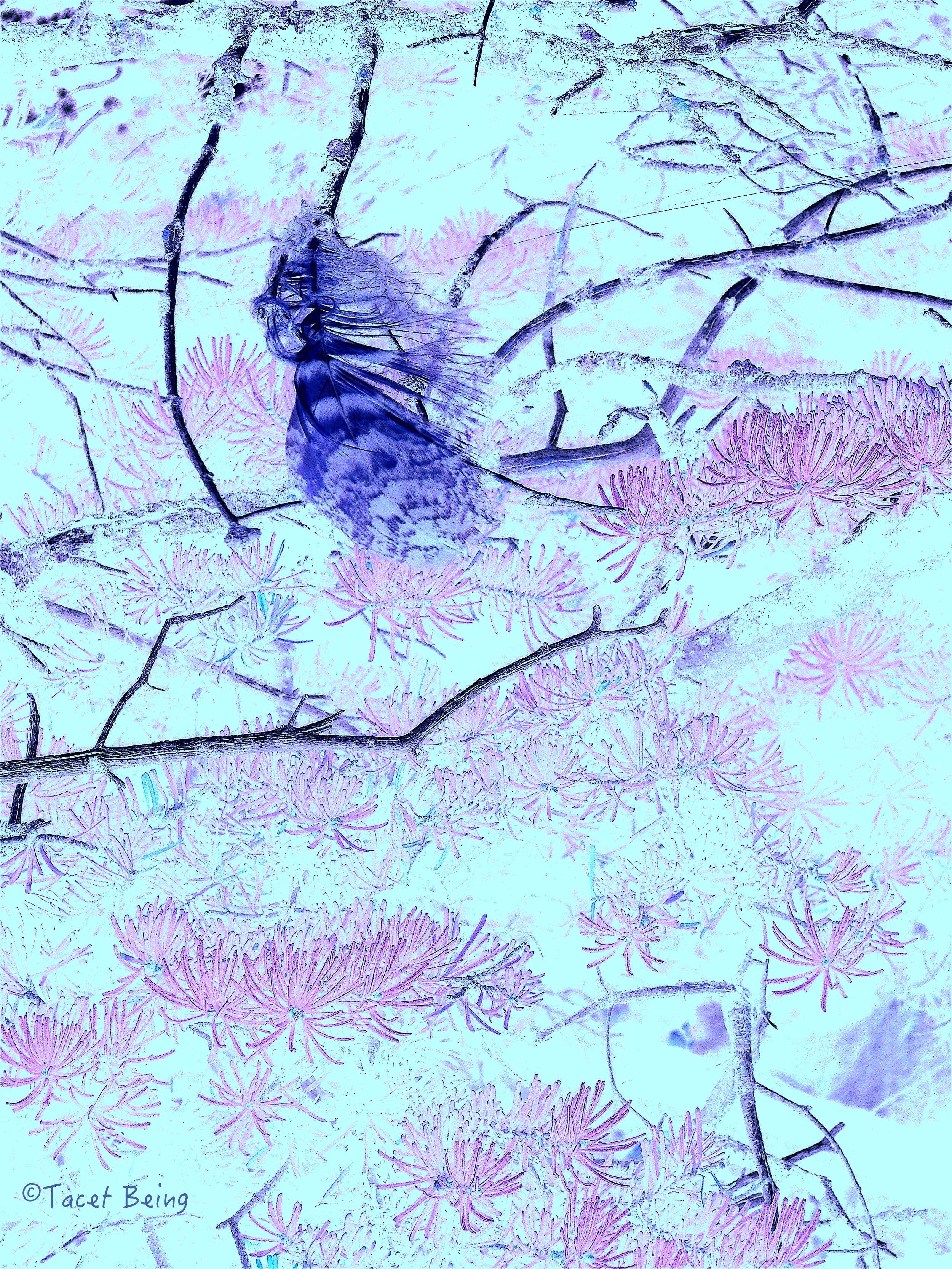 feather in tree blown_tb.jpg