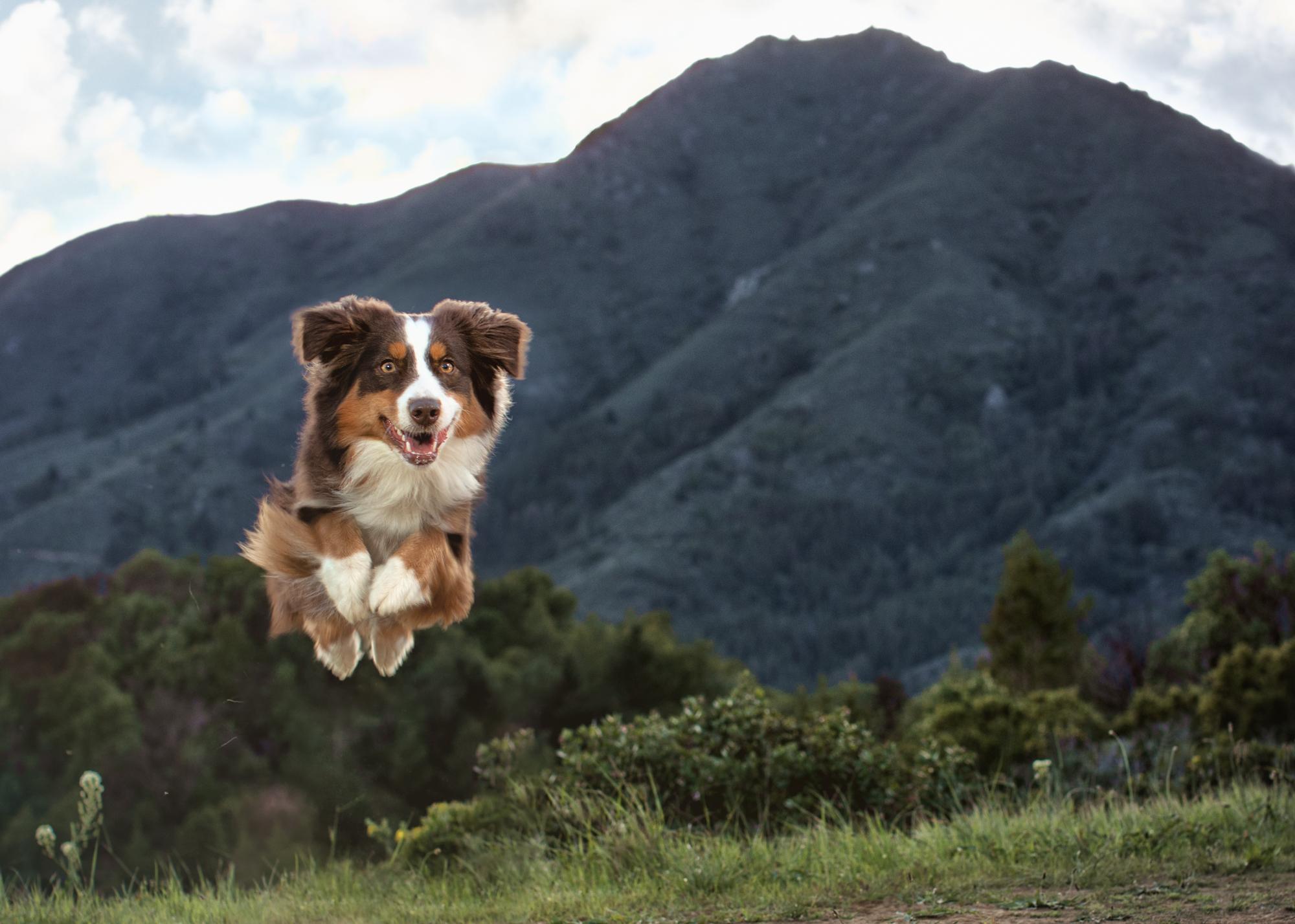 Liz Greer Dog Photography