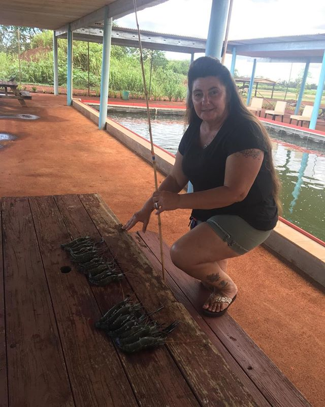 Champion of the day. 11 prawns in an hour.At Ali'i Agriculture farm #prawnsfishing #aliiagfarm.