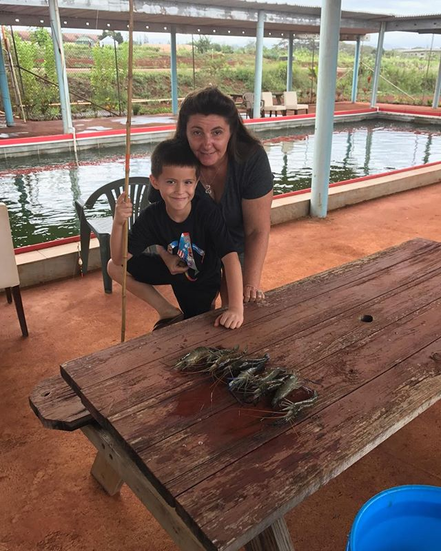 Patrick is the record holder for catching 9 prawns in an hour at Ali'i Agriculture farms #prawnsfishimg #alliiagriculturrfarms.