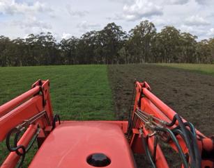 Australian garlic growers