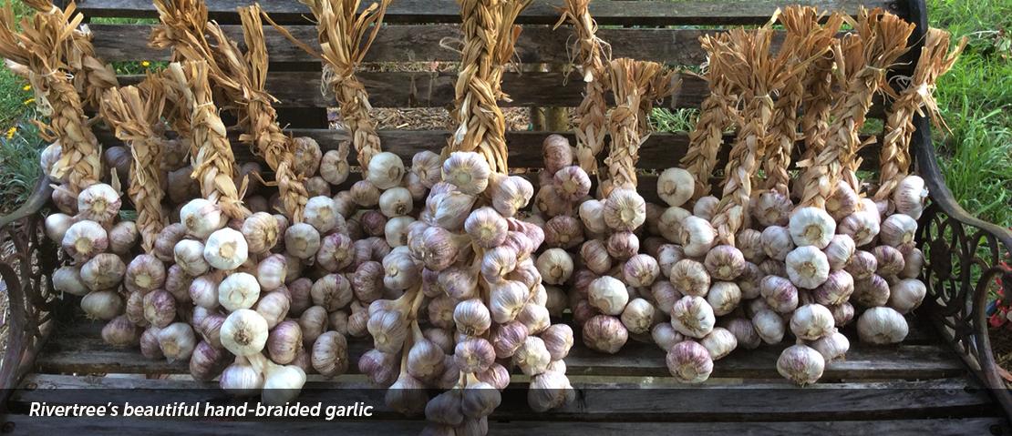 Rivertree's Beautiful hand-braided garlic