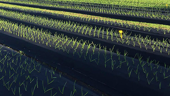 seeds_348x197.png
