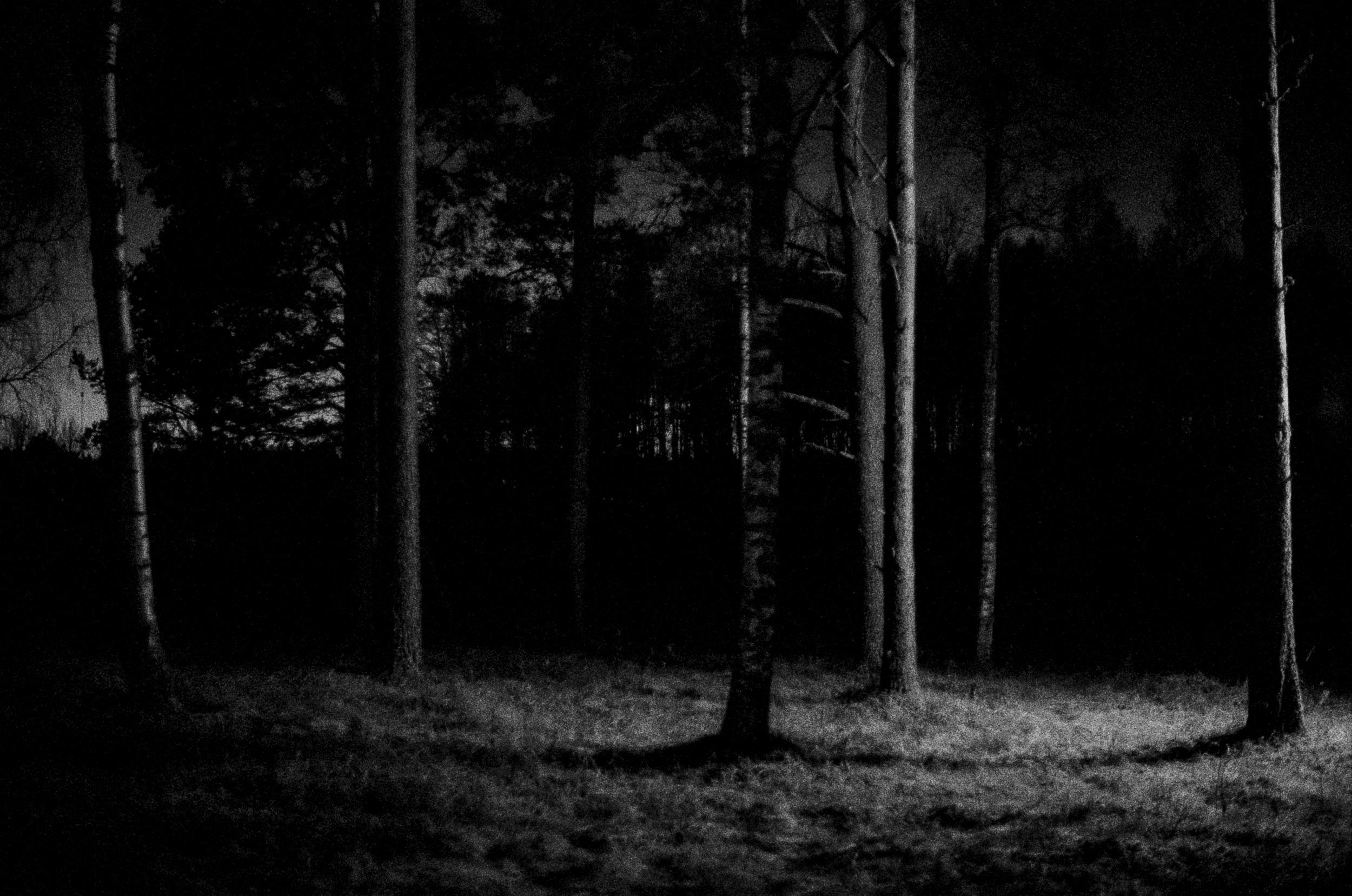 Tree trunks at night, 35mm, Nelimarkka Museo, 2018