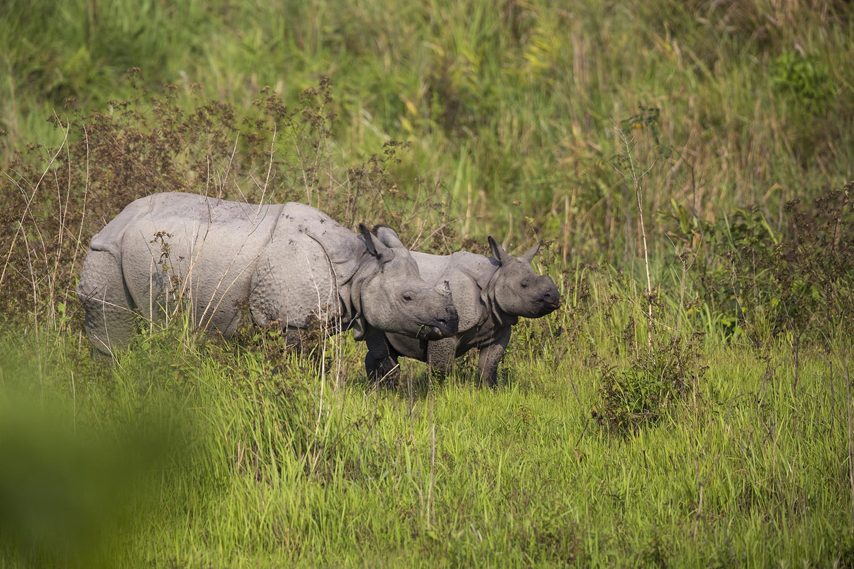 Wildlife Safaris Indias Big Five_3.jpg