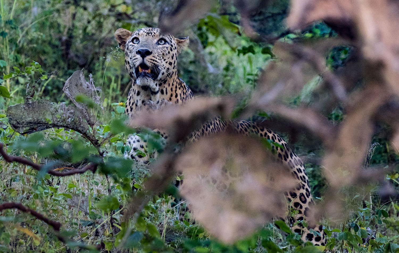 Wildlifesafaris Bigfive_3.jpg