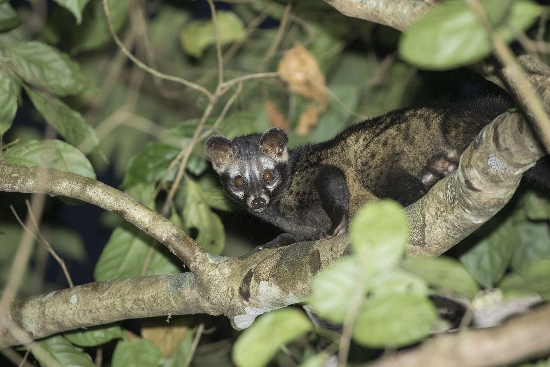 Wildlife Safaris Mammalwatching_2.jpg