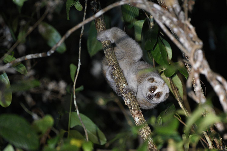 Wildlifesafaris_mammalwatching_1.jpg