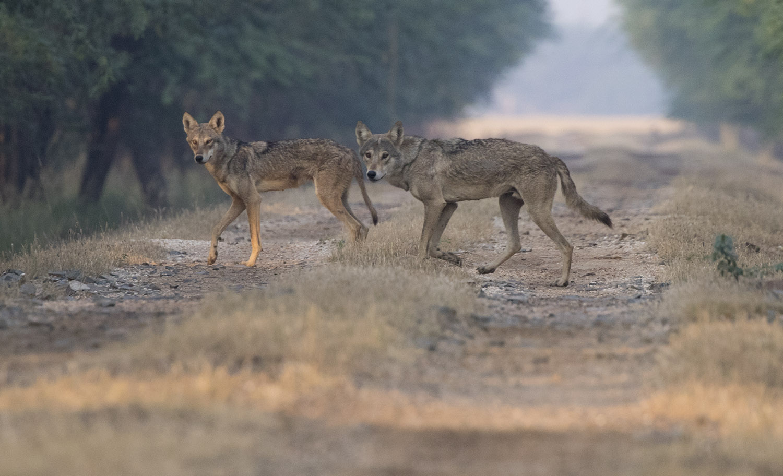 Willdife Safaris mammalwatching_4.jpg