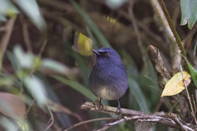 Wildlife Safaris Birdwatching Image_4.jpg