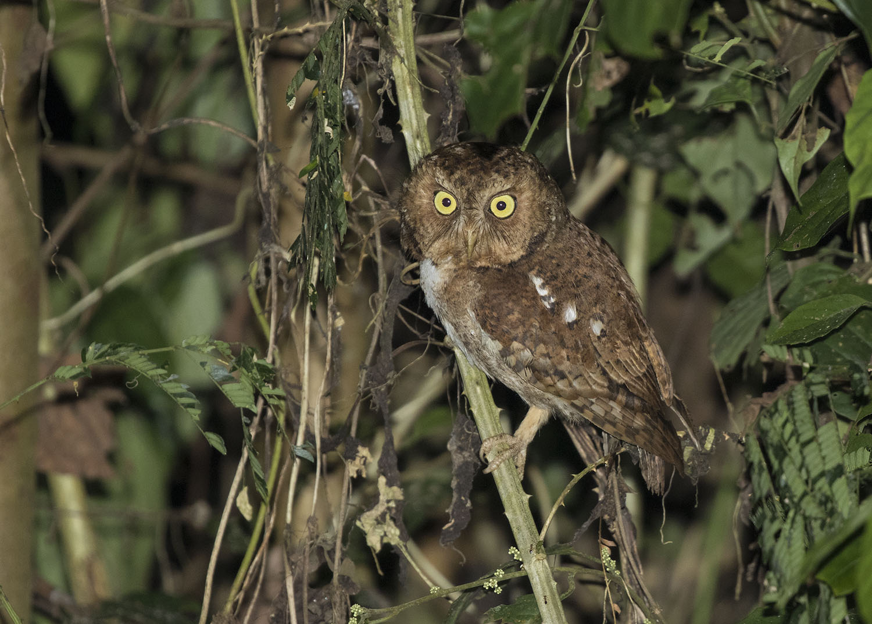 Wildlife Safaris Birdwatching Image_3.jpg
